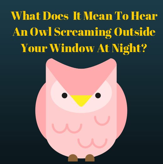 OwlMeaning